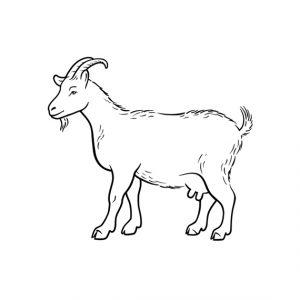Half Kid Goat (Cut to Order)