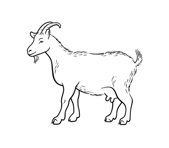 Half Kid Goat (Cut to Order)